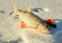 Зимняя рыбалка в Балакове