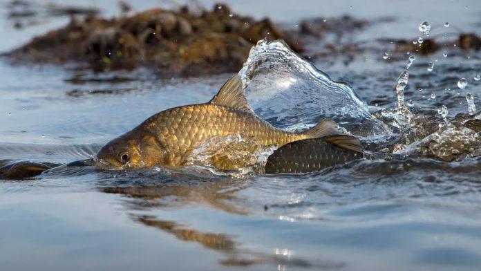 Места нереста разных рыб
