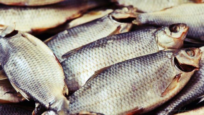 Засолка и вяление рыбы