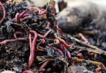Наживки: черви и опарыш для рыбалки