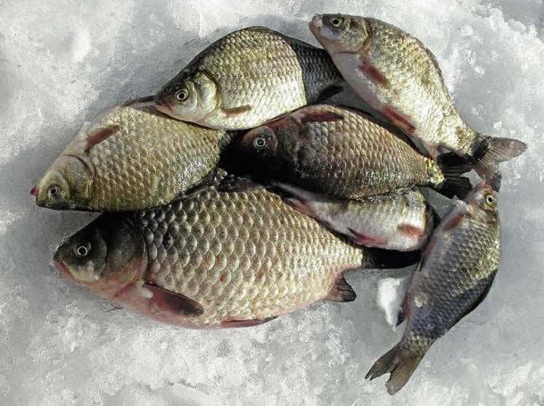 Рыбалка зимой на карася