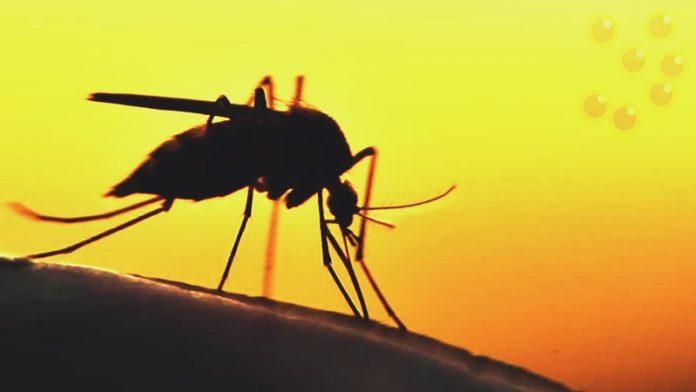 Средства от комаров на природе