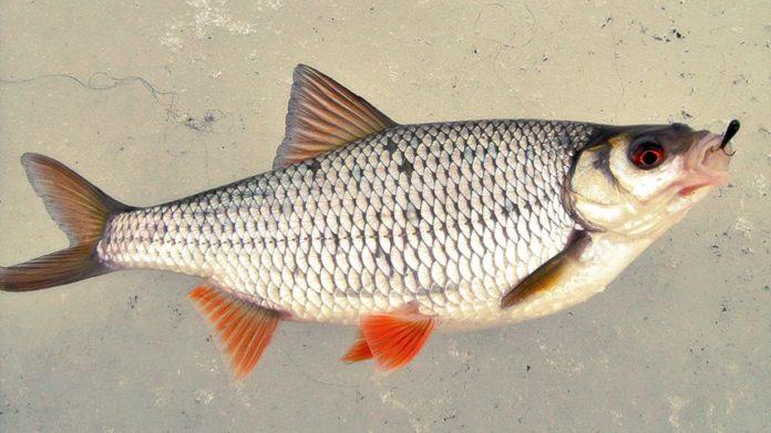 Рыбалка на Чертика