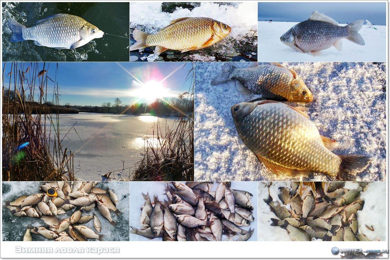 Карась зимой: ловля карася зимой, зимние снасти на карася ( видео)
