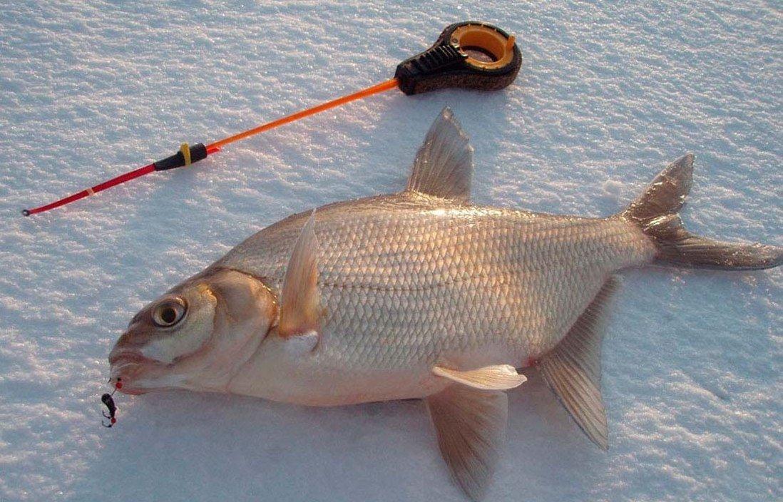 Читать книгу Все о зимней рыбалке Антона Шаганова : онлайн чтение