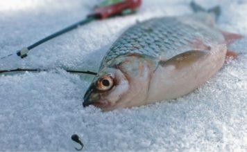 Технология зимней рыбалки