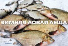 Зимняя ловля леща - видео
