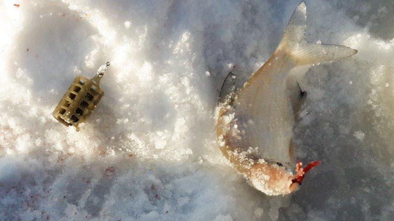 Ловля на зимний фидер