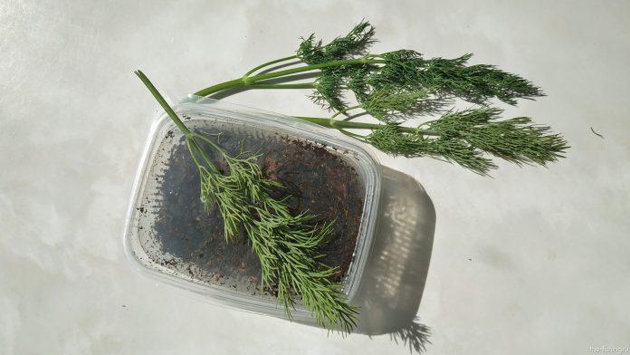 Улучшение уловистости червя