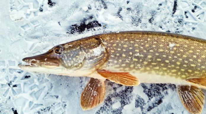 Зимняя рыбалка и первый лед 2020-2021